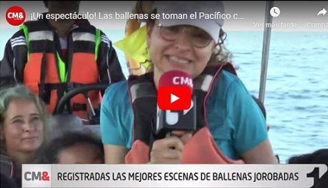 ¡Gran espectáculo! Las ballenas se toman el Pacífico colombiano para dar a luz a sus crías, 'VIDEO'