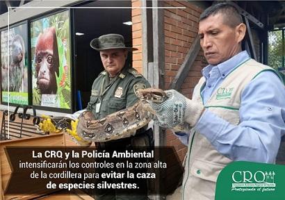 Por muerte de felino, CRQ y Policía Ambiental intensificarán controles en parte alta de la cordillera para evitar caza de fauna silvestre