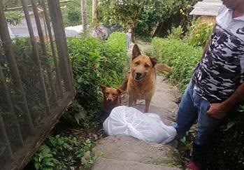 CRQ entrega alimento a perros y gatos en situación de calle en esta cuarentena