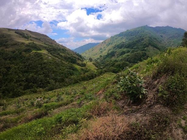 Procesos sancionatorios por cultivo de aguacate en Pijao fueron remitidos a la Autoridad Nacional de Licencias Ambientales