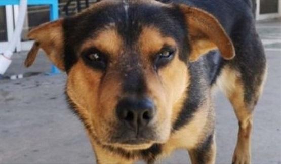 En la entrada de un hospital, un perro espera a su amo que murió de COVID-19
