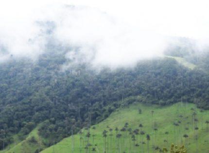 Con inversión de $ 30 millones CRQ apoya 16 familias que se dedican a la conservación en áreas protegidas