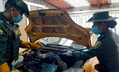 Boa constrictor apareció en el motor de un taxi en Bogotá