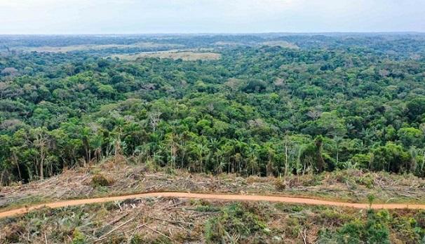 En Colombia la deforestación ya es delito y será penalizada hasta con 15 años de cárcel